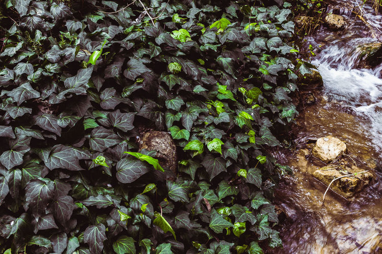 High angle view of leaves on rock in forest