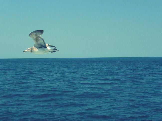 제주도에서.. 멋진 갈매기. Seagull Travel JEJU ISLAND