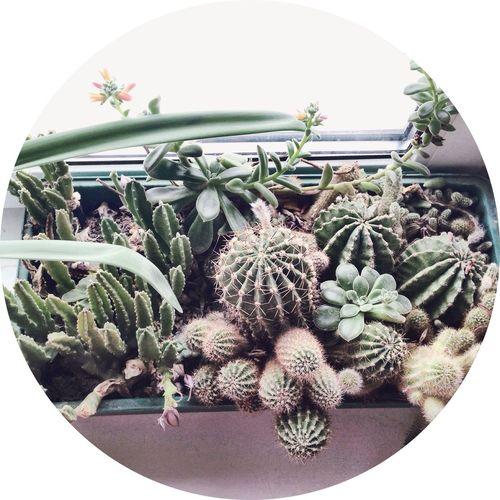 Cactus I Love Cactus Cactus Flower