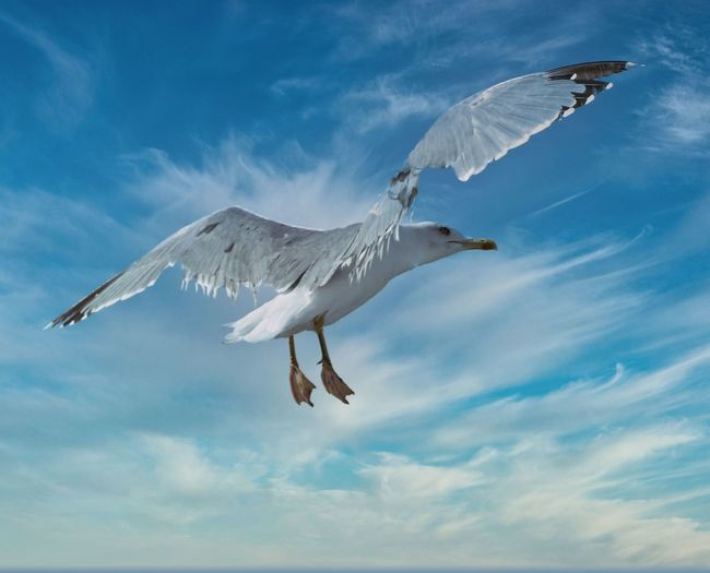 Low angle view of seagull about to land
