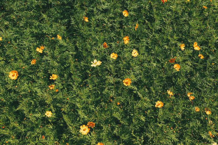 High angle view of flowering plants on field