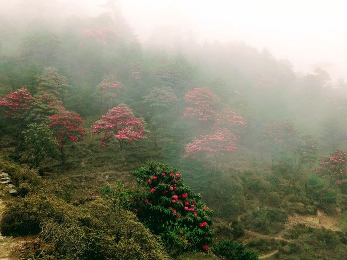 Fog Nature Mist Growth Beauty In Nature Tree Landscape Hazy  Tranquility Tranquil Scene No People Day Outdoors Scenics Plant Wilderness Forest Dawn Sky