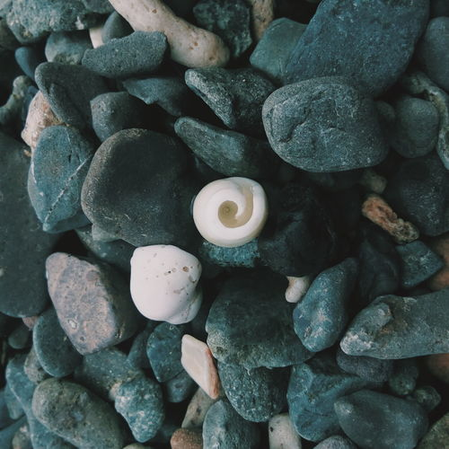 Circular Backgrounds Full Frame Close-up Pebble Beach Seashell Shell