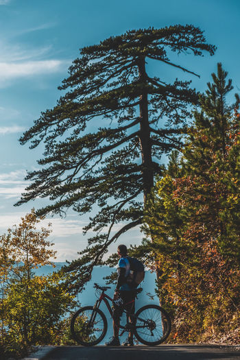 Man riding bicycle on tree against sky