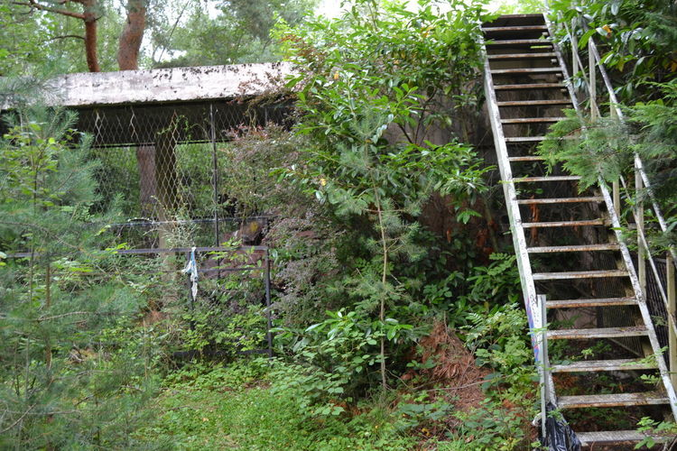 Staircase by building in forest