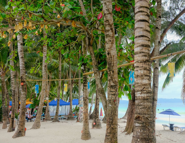 Beach Beauty In Nature Coconut Palm Tree Day Forest Growth Land Nature No People Outdoors Palm Tree Plant Sand Scenics - Nature Tranquil Scene Tranquility Tree Tree Trunk Tropical Climate Tropical Tree Trunk Water