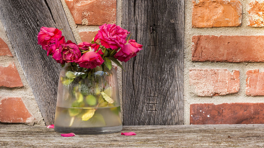 Wilted roses on a wooden bench Wilted Rose Wood Architecture Beauty In Nature Brick Wall Building Exterior Close-up Day Flower Flower Head Fragility Freshness Multi Colored Nature No People Outdoors Petal Pink Color Red Support Bar Vase Wall - Building Feature Wilted Wilted Flower