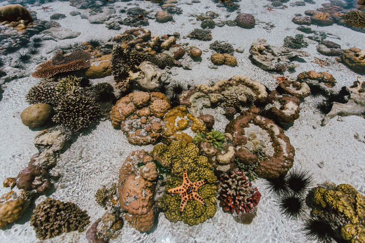 High angle view of coral on rock in sea
