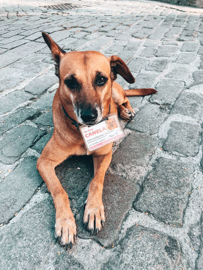 High angle portrait of dog sitting on footpath
