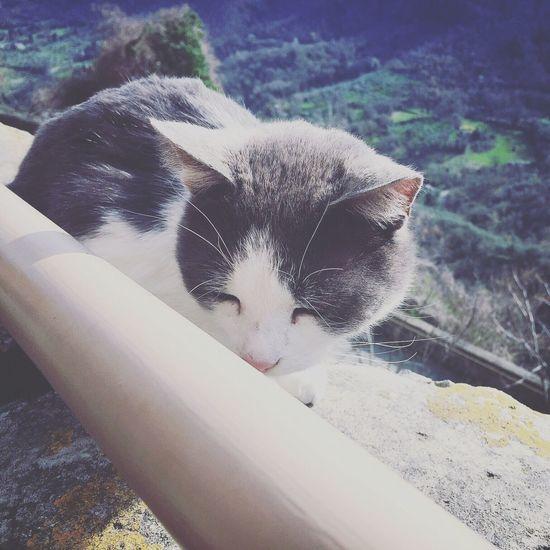 我也想慵懶的像隻貓~