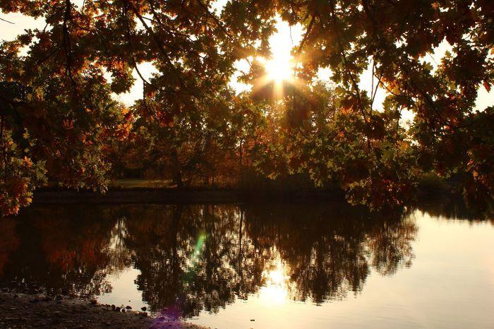 Giessen Schwanenteich Lake Autumn Autumn Colors Red Color