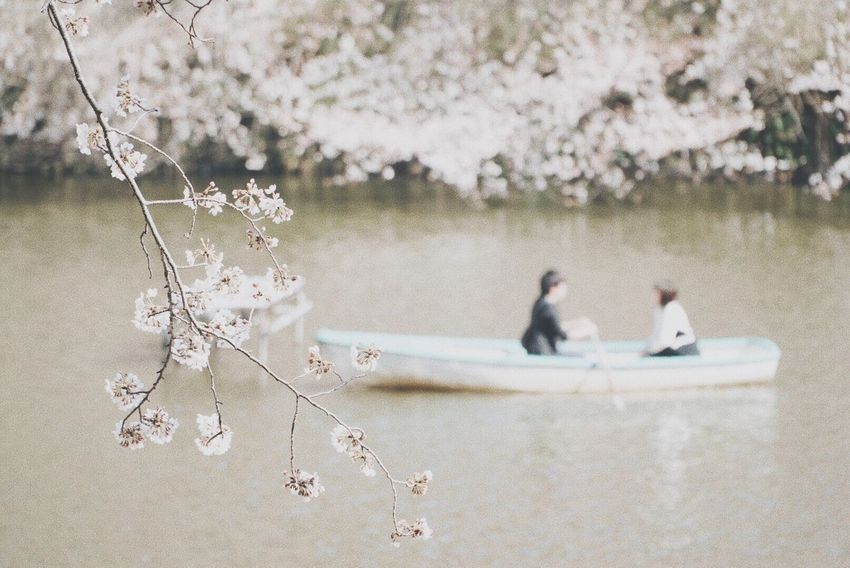 Flower Nature Tree Beauty In Nature Water Lake Branch Day No People Nautical Vessel Outdoors Animal Themes Fragility Bird Close-up Cherry Blossoms Lovers Japan Japan Photography Boat Breathing Space