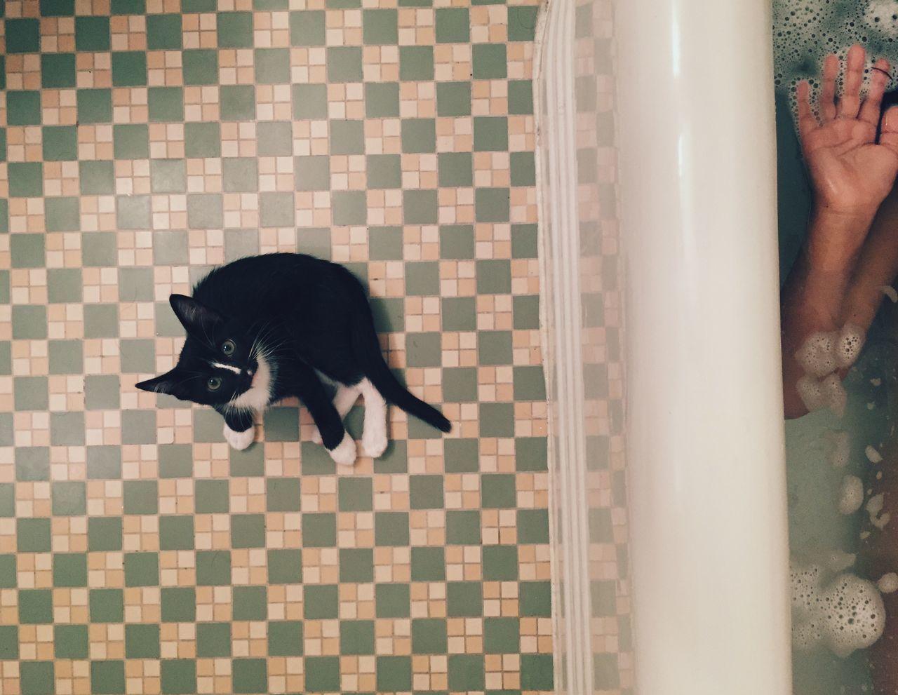 Portrait of cat sitting by bathtub in bathroom