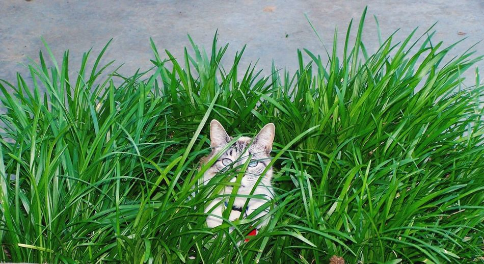 Family pet YZ EyeEmNewHere Love Of Animals Family Cat Cats Grass One Animal Day Outdoors Nature Animal Themes No People