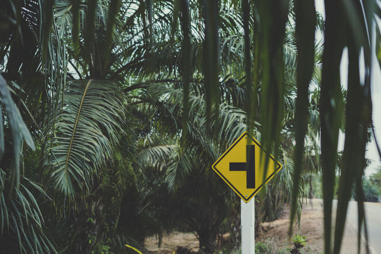 If you don't know where you are going, any road will get you there. Sign Tree Communication Plant Palm Tree Road No People Day Road Sign Yellow Arrow Symbol Nature Symbol Guidance Tree Trunk Trunk Information Growth Focus On Foreground Forest Outdoors Ijas Muhammed Photography Thailand Moody Nature