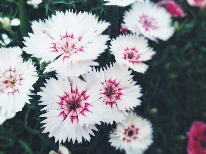 素雅~Flowers shots Nature Photography Flower Head Flower Tree Springtime Pink Color Stamen Blossom Close-up Plant Petal