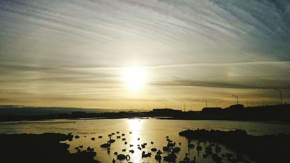 Sunrise Sun