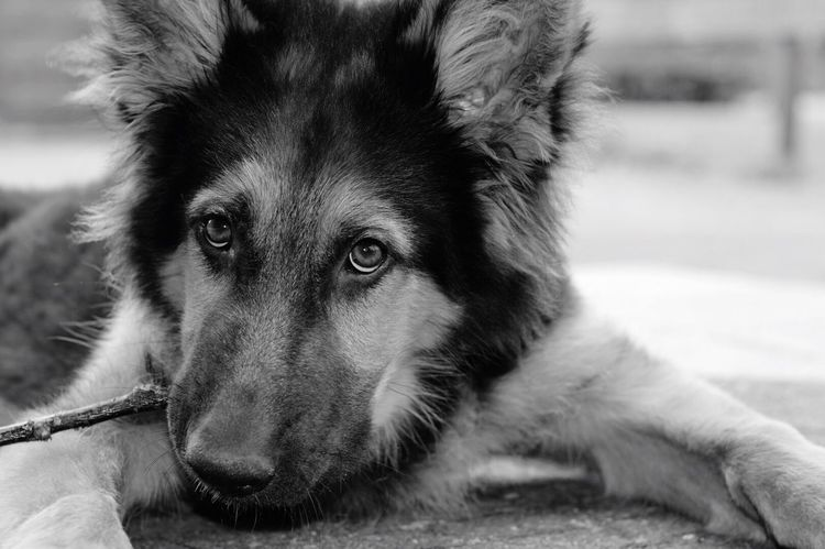 Dog One Animal Pets Animal Themes Mammal Domestic Animals Focus On Foreground Close-up Looking At Camera Portrait No People Day Outdoors Nature