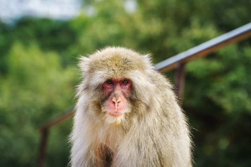 Monkey Animal Themes Animals In The Wild Portrait One Animal No People Outdoors Nature Day Mammal