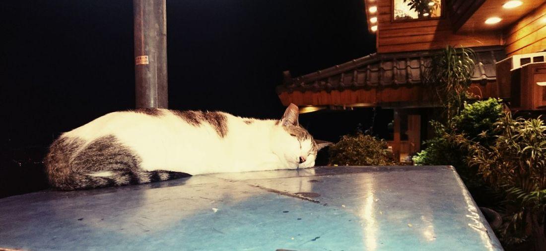 Taiwan Taipei Hello World Relaxing Cat Sleeping Sleeping Cat