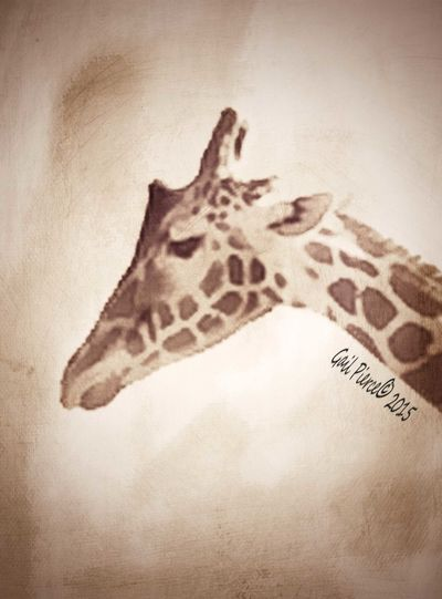 Giraffe. Animals Zoo Animals  Elegant Animal Digital Expressionism Blended Images, From My Point Of View Photo Art Faux Vintage