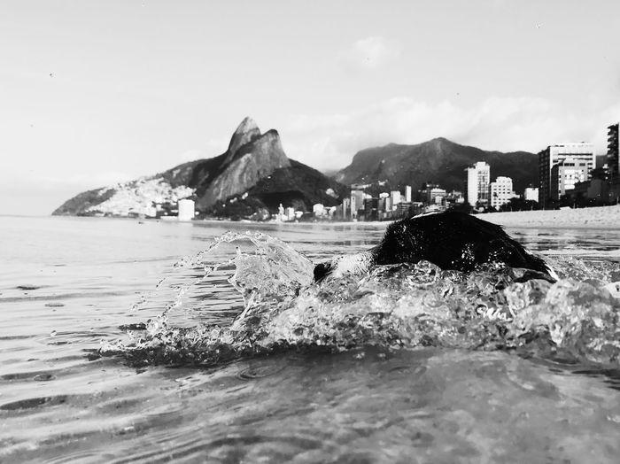 The Week On EyeEm Ipanema Beach Ipanema Rio De Janeiro Brazil Jackrussell Jack Russell Blackandwhite Black And White Nikon D750 The Week On EyeEm