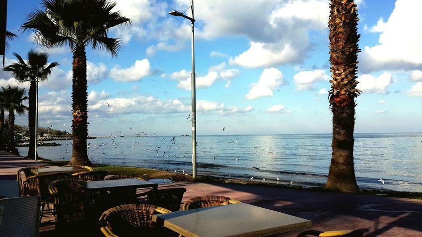 #türkiye #Turkey Anadolu Anatolia EyeEmNewHere Yalova Yalovasahili Deniz Bulut Tree Water Sea Beach Sky Horizon Over Water Cloud - Sky