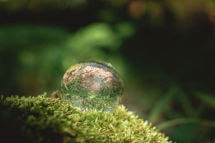 Environment concept, a crystal ball lies on a moss in the forest, relaxation. glass material.