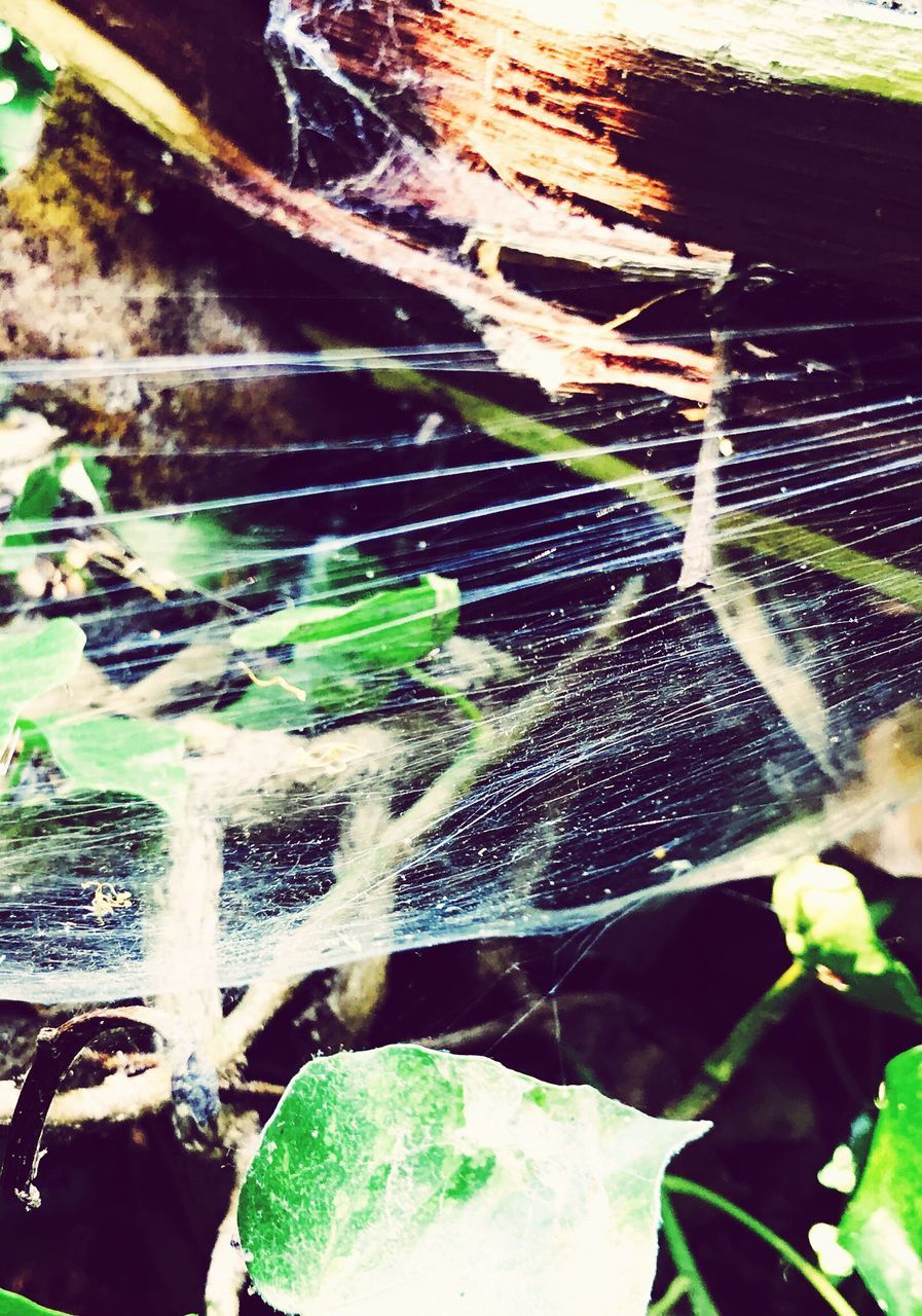 no people, outdoors, close-up, nature, day, leaf, fragility, spider web, beauty in nature, water