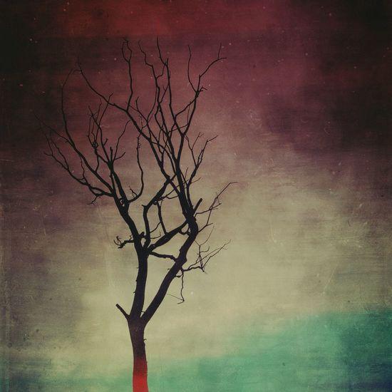 Edited Mextures Dead Tree Artistic