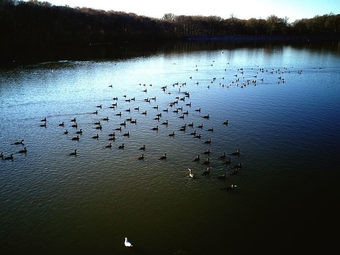 Water Large Group Of Animals Bird Animals In The Wild Nature Lake Outdoors Beauty In Nature No People France Floating On Water