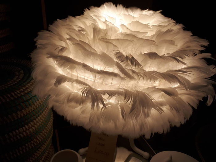 Feathers Archival Animal No People Close-up Fragility Indoors  Lamp