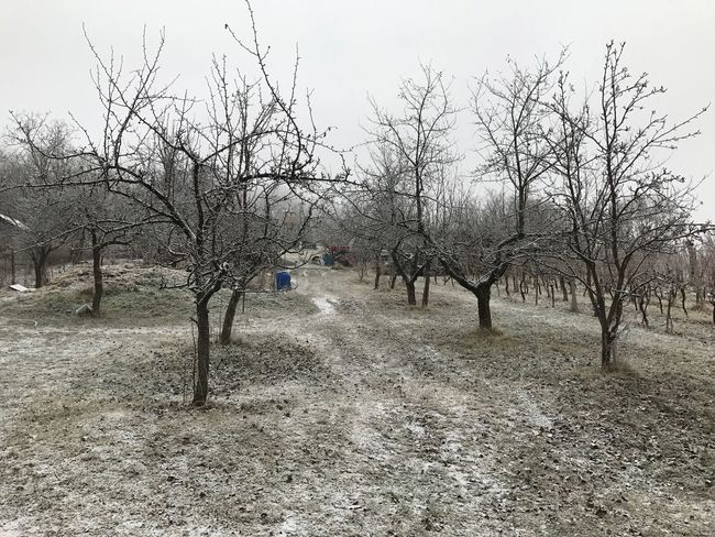 Starý Hay, NR. Krupina, Slovakia Landscape Vineyard Vines Trees Winter Slovakia Apple Tree Snow Outdoors Nature Farm Cold Moody