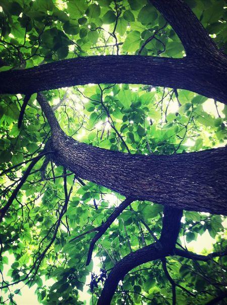 Taking Photos Tree Green Enjoying Life