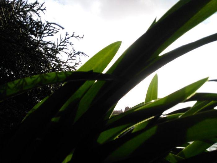Tree Leaf Sky