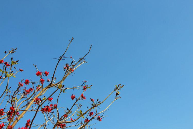 Summer Landscape Traveling View Sky Flowers OpenEdit Tree Trees