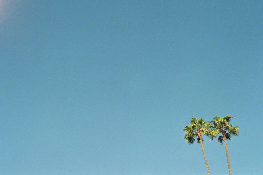 Beautiful Day Blue Blue Sky California Clear Sky Day Film Photography Filmisnotdead Heat High Section Los Angeles, California Low Angle View Palm Palm Trees Scenics Sky Summer Summertime Tranquil Scene Tranquility USA
