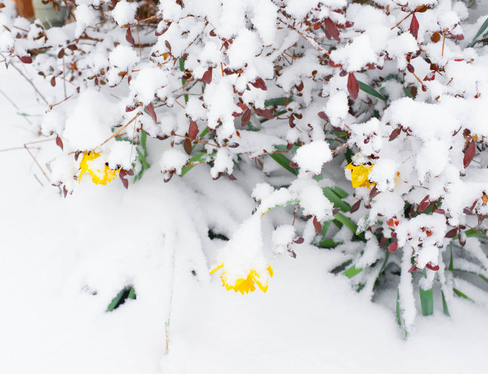 EyeEmNewHere Beauty In Nature Firstdayofspring Flower Fragility Nature Snow Winter
