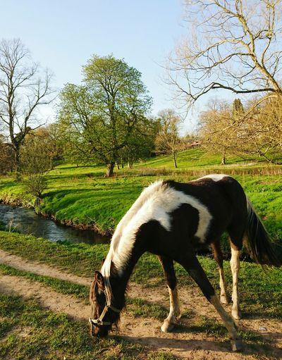 Foal Grazing On Field