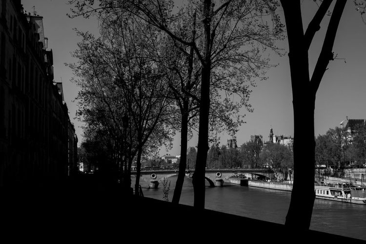 Silhouette trees by street against buildings in city