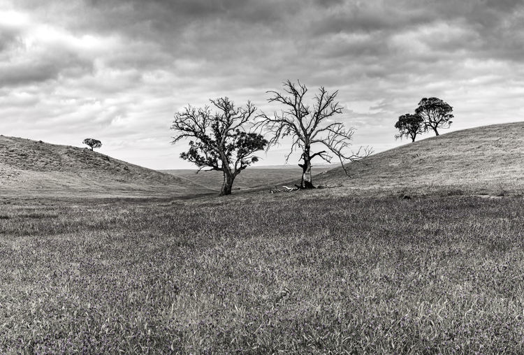Bare Tree Black And White Branch Grass Landscape Nature Outdoors Tranquil Scene Tree