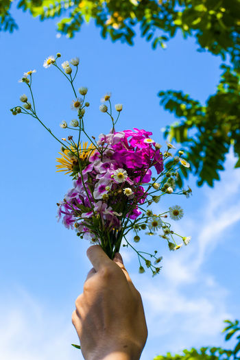 Low Angle View Of Bunch Of Flowers Against Sky