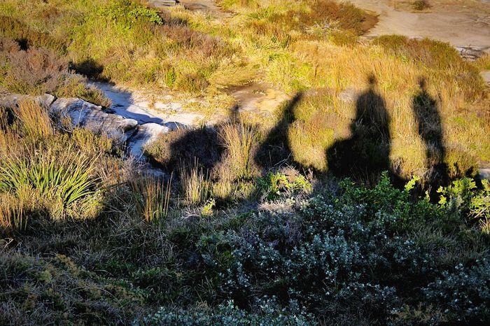 • Shadows • EEA3 EEA3 - Sydney Light And Shadow Shadow Photographer Nature On Your Doorstep Share Your Adventure The Great Outdoors - 2015 EyeEm Awards Instameet Creative Light And Shadow