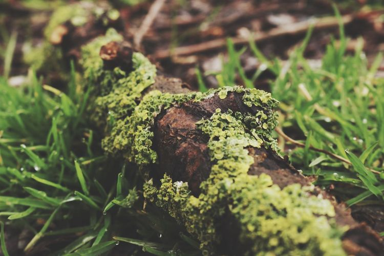 Canon EyeEm Nature Lover Branch Nature Growth Green Color Fungus Close-up Beauty In Nature