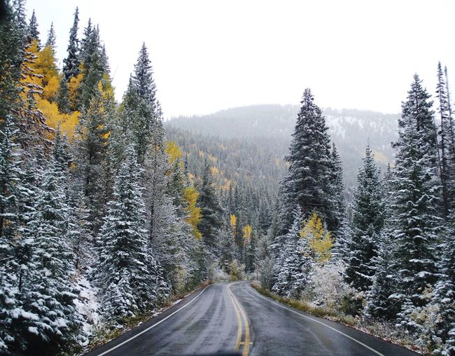 Mountain Road Colorado Autumn Fall Colors Nikon Adventure Nature Photography Tree Plant Road Nature Transportation The Way Forward Direction Cold Temperature Sky No People Scenics - Nature Winter Beauty In Nature Growth Snow Forest Non-urban Scene Pine Tree Tranquility Diminishing Perspective