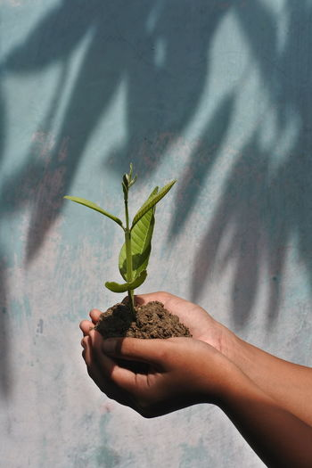 Cropped hands holding plant against wall