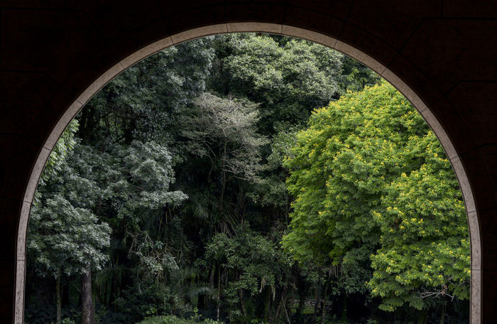 Looking outside the Grande Hotel Araxá...Brazil Araxa Barreiro Brazil Forest Frame Looking Out Minasgerais Nature Scenics Thru The Window Tree It's Cold Outside Better Look Twice Q for quiet or quitude Urban Spring Fever Landscapes With WhiteWall The Great Outdoors With Adobe The Great Outdoors - 2016 EyeEm Awards Your Design Story Nature's Diversities
