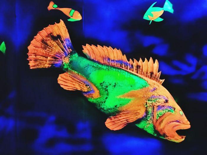 One Animal Multi Colored Blue UnderSea Nature Inside Water Fishtank Colourful Life