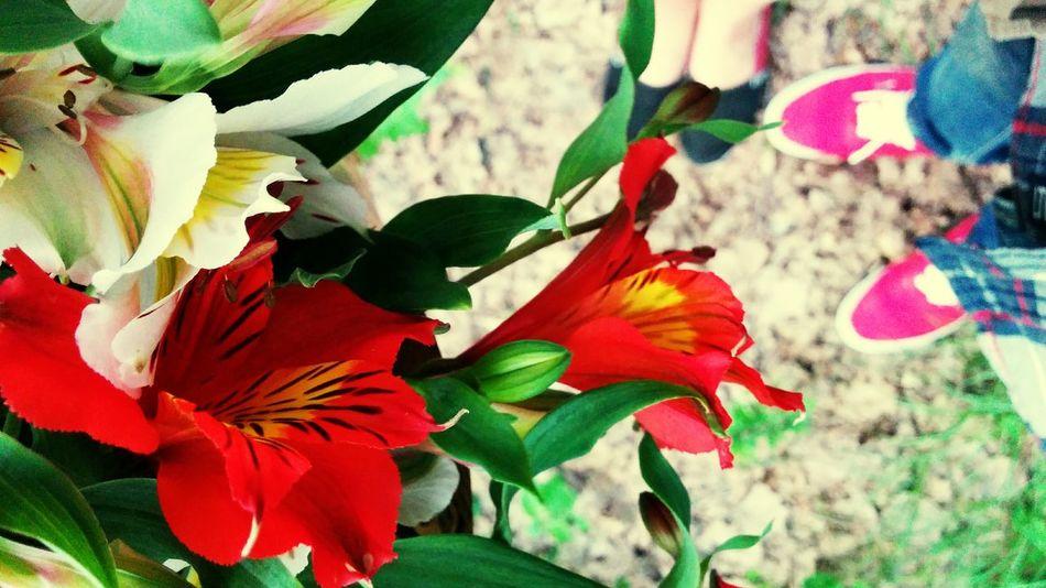 Eighteen months. Flowers Spring Love Close