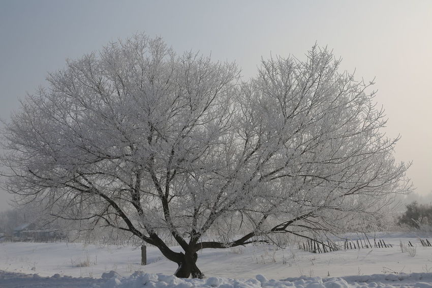 Bare Tree Beauty In Nature Branch Clear Sky Cold Temperature Day Landscape Nature No People Outdoors Scenics Sky Snow Tranquil Scene Tranquility Tree Weather Winter